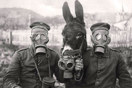 Archive photo of German soldiers in gas masks - the donkey is wearing a mask too